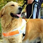 Školovanje pasa pomagača oboljelima od epilepsije