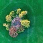 """Dan planeta Zemlje, 22. travnja pod sloganom """"Trees for the Earth"""""""