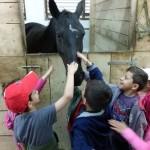 Predsjedica donirala dva konja udruzi Krila za terapijsko jahanje