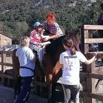 Povećali smo broj volontera educiranih za terapiju pomoću konja