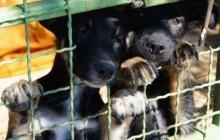 Zbrinjavaju pse iz cijele Međimurske županije
