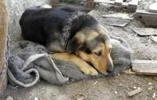Novi Zakon o zaštiti životinja je u mnogome korak naprijed
