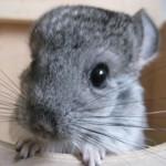 Prijatelji životinja o izmjeni Zakona o zaštiti životinja