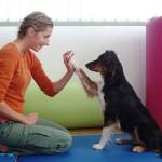 Odnos koji djeca s teškoćama ostvaruju sa psom ne može ni s čim usporediti