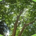 """Tribina """"Održavanje i korištenje zelenih površina u Zadru"""""""