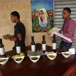 Izraelski volonteri štite palestinske maslinare od napada naseljenika