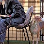 Prijatelji životinja: 9 razloga zašto bi trebalo uvesti porez na pse
