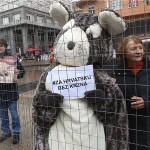 Više od 700 komentara na javnoj raspravi za činčile: građani protiv uzgoja životinja za krzno