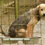 """Prijatelji životinja filmom """"Zemljani"""" protiv nasilja nad životinjama"""