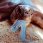 Podrška ukidanju besplatnih plastičnih vrećica