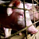 Eksplicitne snimke okrutnosti u prijevozu živih životinja alarmirale Europsku komisiju
