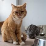 Tajvan zabranio ubijanje pasa i mačaka radi prehrane