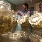 Marihuana kao poslovna prilika