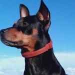 Prvi put u Hrvatskoj lovac osuđen zbog pucanja na psa