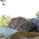 Revija marama od svile ukrašenih eko tiskom