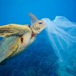Greenpeace: Spasimo Mediteran od najezde plastike