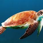 WWF oštro osuđuje incident namjernog ubijanja morske kornjače