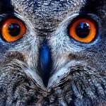 U povodu Međunarodnog dana zaštite životinja u subotu zabavni program na Bundeku