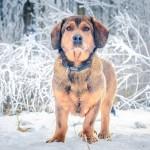 Crveni alarm u Dumovcu – čak 250 zagrebačkih pasa čeka novi dom