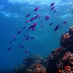 I oceani umiru, a krivi su opet ljudi