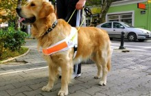 Zagreb: Hrvatska udruga za školovanje pasa vodiča i mobilitet traži videćeg pratitelja