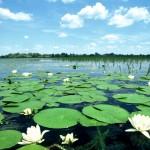 U Sloveniji prikupljeno 77.000 potpisa u peticiji protiv novih hidrocentrala na rijeci Muri
