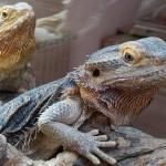Godzilla i Smaug u Životinjskom kutku