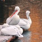 U povodu Svjetskog dana voda edukacija o kolijevci života