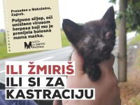 21 udruga za zaštitu životinja apelira na građane da od svojih gradova i općina traže obavezu trajne sterilizacije!