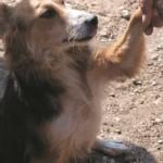 U svibnju kreće akcija kastracije pasa u romskim naseljima Međimurske županije
