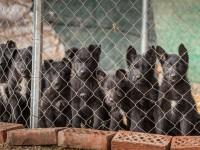 Prijatelji životinja pozivaju lokalne zajednice i građane na ispunjenje svojih zakonskih obaveza