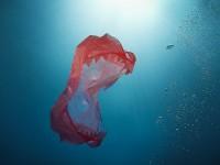 Prestanimo hraniti čudovište od plastike!