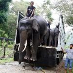 Najmanje 207 aktivista za zaštitu okoliša ubijeno u 2017.