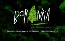 Zazelenimo požarišta Dalmacije! – Posadi virtualno drvo i sudjeluj u najvećoj volonterskoj akcija pošumljavanja!