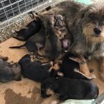 Mreža za zaštitu životinja poziva na javno okupljanje za provedbu Zakona o zaštiti životinja