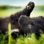 Azil Dumovec: Traže se volonteri koji će malo svog vremena i energije pokloniti napuštenim psima