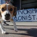 Mreža za zaštitu životinja: Ljubav se ne kupuje!