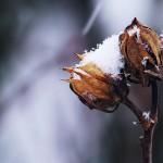 Pjesničko – ekološki rezidencijalni program 'Tragovi u snijegu – Sjeme za budućnost'