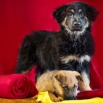 Zagreb: Sklonište za nezbrinute životinje poziva građane da stare deke daruju psima