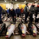 WWF: Međunarodna komisija za očuvanje atlanskih tuna i dalje bez odgovora na prekomjerni izlov
