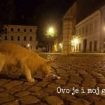 Grad prijatelj mačaka: Sklonište za mačke i u Osijeku