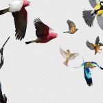 Skupna izložba – Ako u kamionu lete ptice, je li kamion lakši?