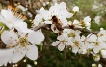 ZMAG-ova radionica pčelarstva uvodi u svijet pčela