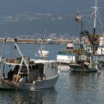 WWF: Europa sve brže ostaje bez ribe