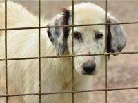 Prijatelji životinja upozoravaju na ilegalnu prodaju i zlostavljanje životinja na tržnicama