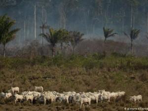 Prokrčeno šumsko područje u regiji Alvorada i ovce na ispaši (picture-alliance/dpa/AP/L. Correa)