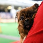 Prijatelji životinja progurali zabranu petardi, hoće li im uspjeti provesti i ideju o uvođenju poreza na pse?