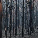 Studenti aktivisti u Australiji održali bdjenja za žrtve požara
