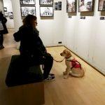 Muzej ratne fotografije otvorio vrata psima pomagačima