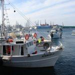 WWF: Od sto najvećih ribarskih kompanija, žena na čelu samo jedne